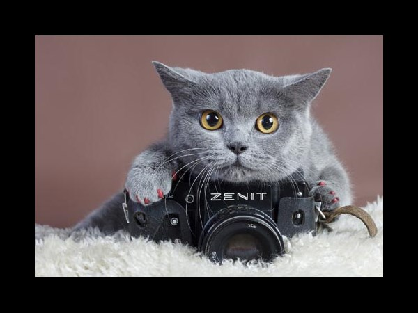Camera Shots With Cute Cats