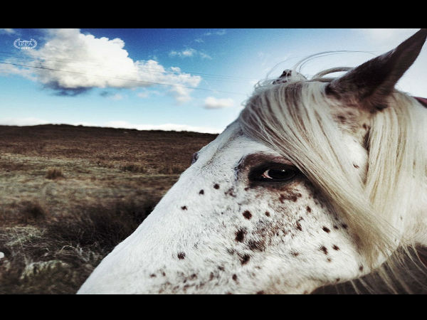 2013 Award Winning iphone Photos