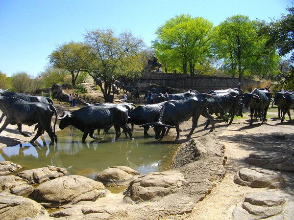 Cattle Drive (Dallas, Texas, USA)