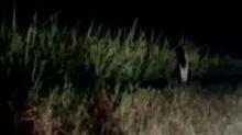 సోషల్ మీడియాలో వైరల్ అవుతున్న పిల్ల దయ్యం వీడియో