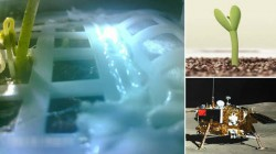 చంద్రుని మీద మొలకెత్తిన పత్తి విత్తనం, షాక్లో శాస్త్రవేత్తలు